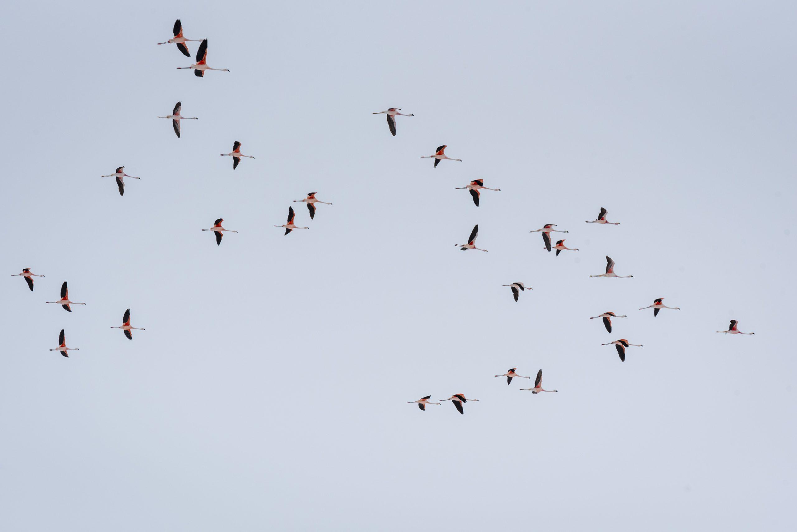 Migration tardive